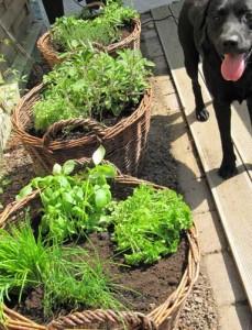 Mein Kräutergarten - oder Kochen ohne Kräuter ist wie eine Party ohne Musik Einkaufen