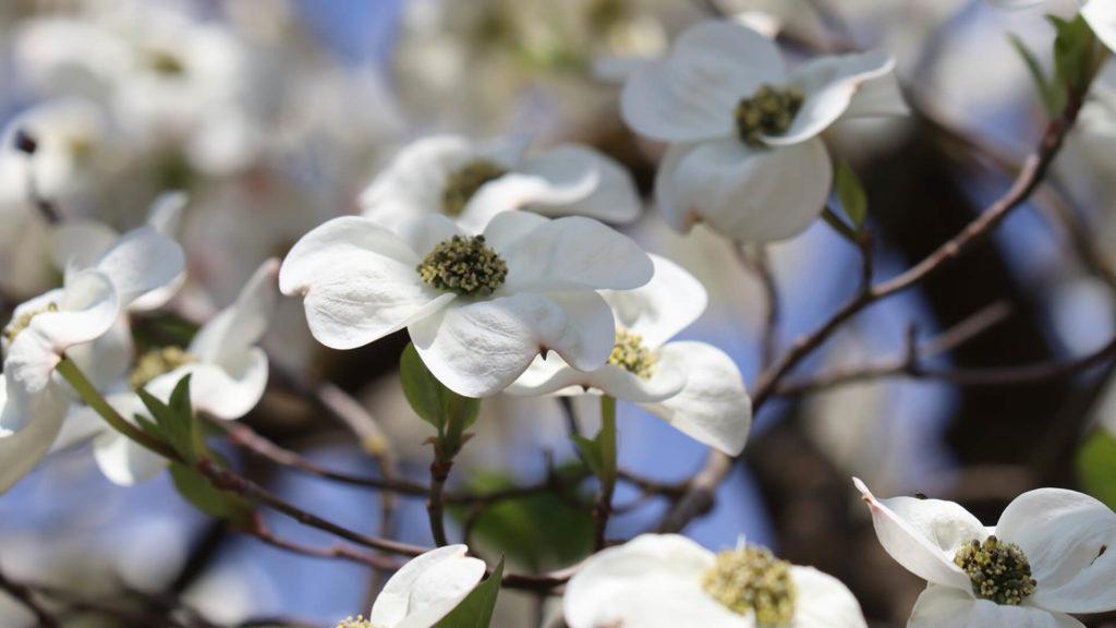 Endlich Frühling - die Gartenzeit beginnt! Garten