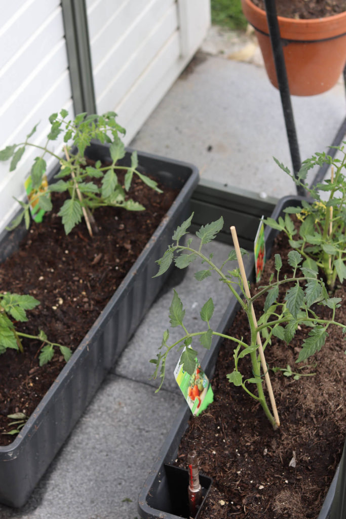 Meine Hochbeete: die Saison 2021 ist gestartet Garten